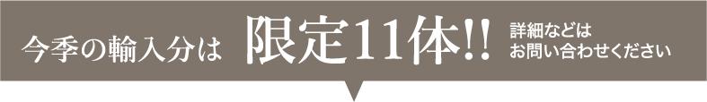 今季の輸入分は 限定11体!!
